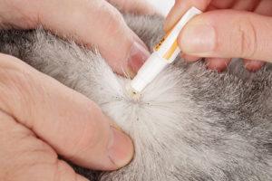 traitement anti-puces sur chat